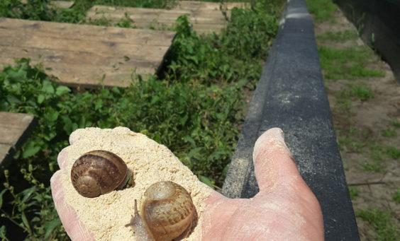 Pasza dla ślimaków