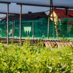 Farma ze ślimakami jadalnymi