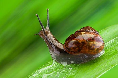 Sprzedaż ślimaków