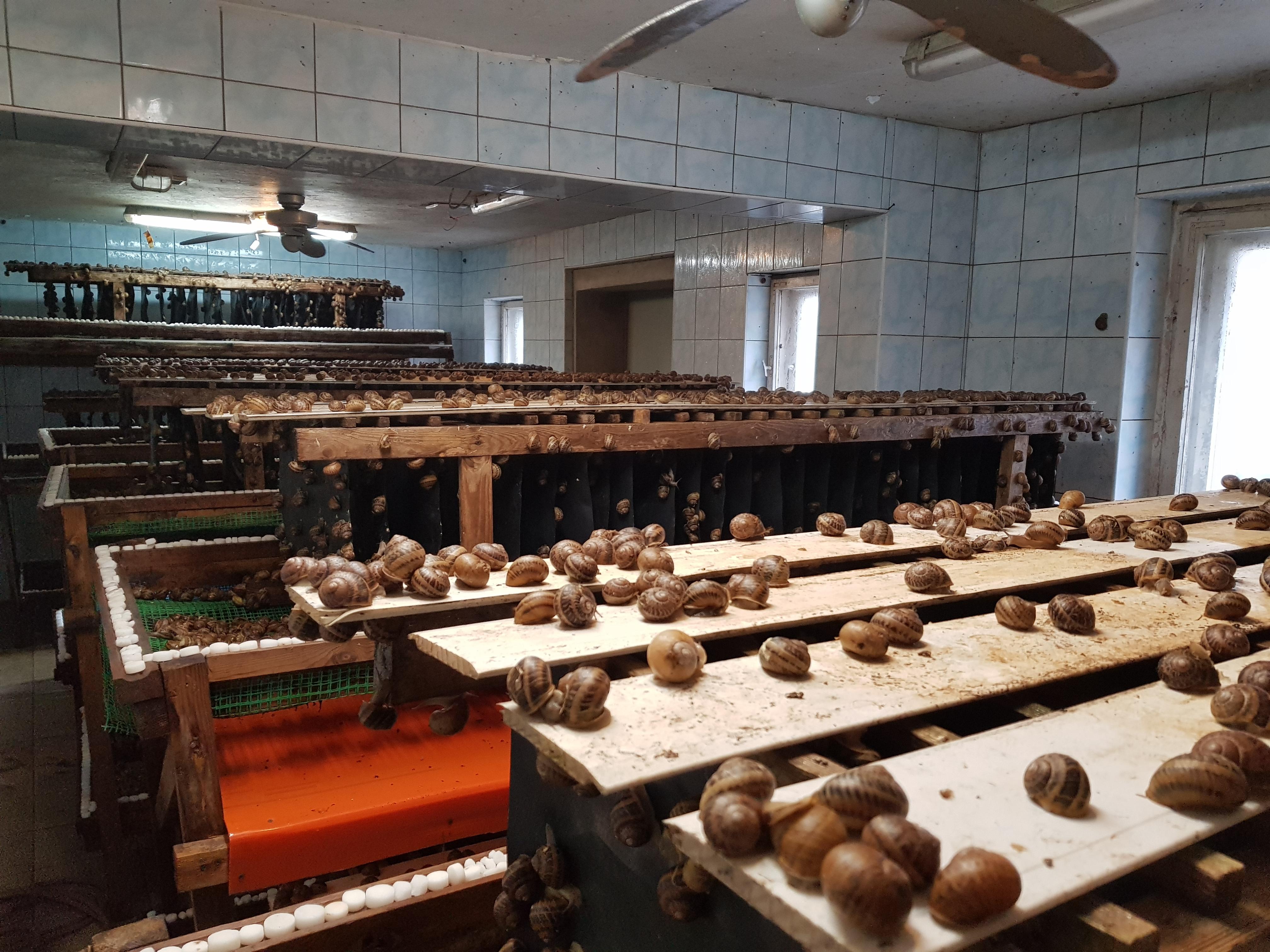 budynek do reprodukcji ślimaków
