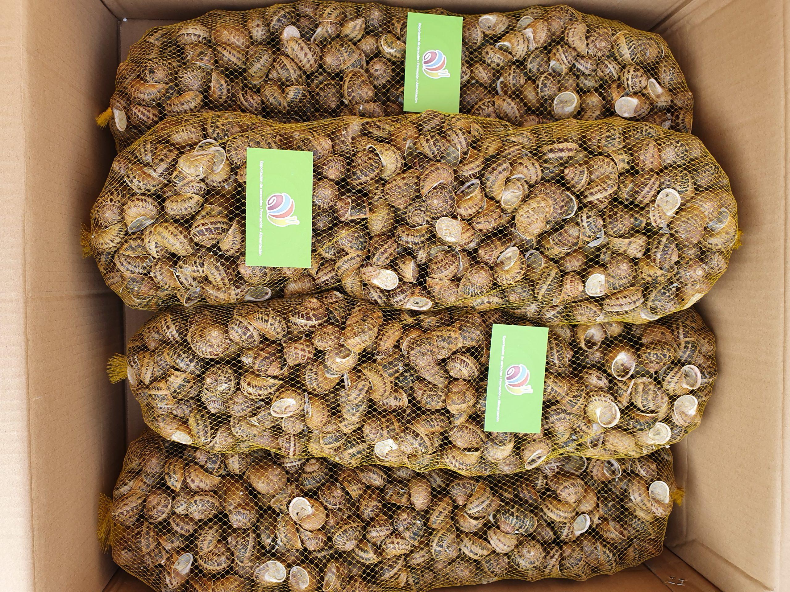 ślimaki w workach po 5,1 kg